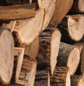 Ліси Рівненщини принесли майже 50 мільйонів