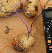 Дубенський школяр видобуває електроенергію з картоплі