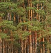 Прокуратура вимагає повернути землі лісового фонду