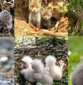 На Рівненщині почався «сезон тиші» для диких тварин