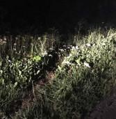 Авто потрапило в кювет: постраждав батько водія