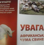 Фермер виявив свиней хворих на африканську чуму